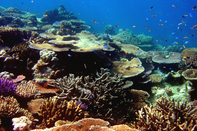 Gran Barrera de Coral de Queensland/Foto Oficina de Turismo de Australia
