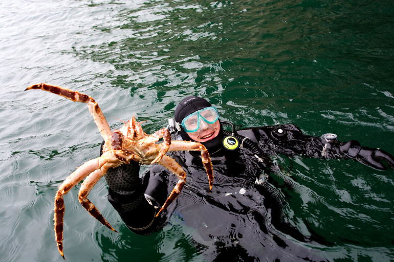 Safari de cangrejo real en Laponia Noruega