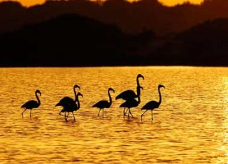 Flamencos en Menorca