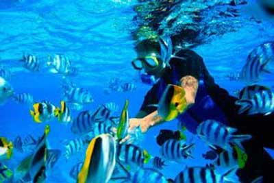 imagen El buceador en Bora Bora