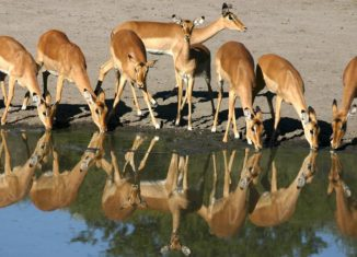 imagen Fitur 2011: Botswana presenta su…