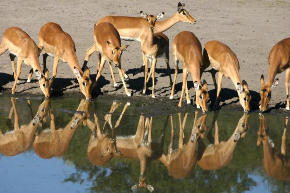 La fauna de Botswana es uno de sus grandes atractivos