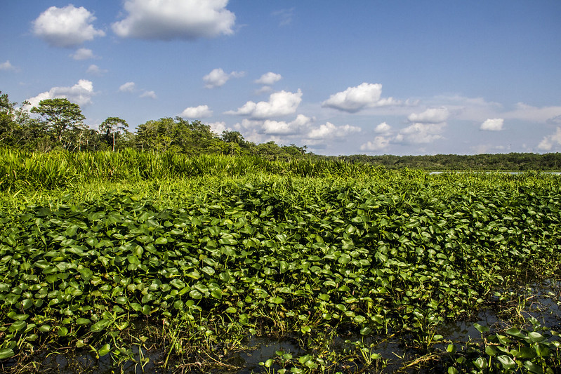 Reserva biológica Limoncocha ©Sergio Garrido, UICN, Proyecto IAPA, 2016