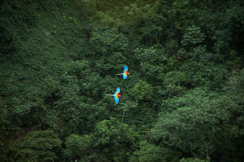 Araras en el Cerrado. Foto Hugo Chinaglia. Licencia Creative Commons