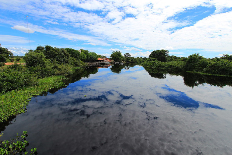 Pantanal. Autor Marinelson Almeida. Licencia Creative Commons