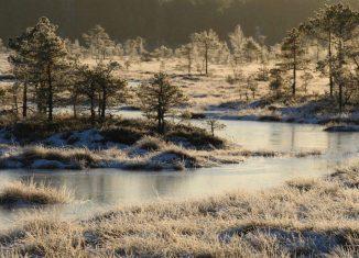 imagen Visita al Parque Nacional de…