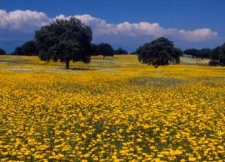imagen Turismo ornitológico en Extremadura: donde…