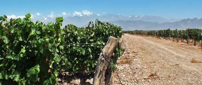imagen Mendoza, rutas del vino en…