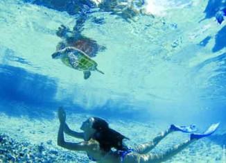 imagen Información Tahití: participa en el…