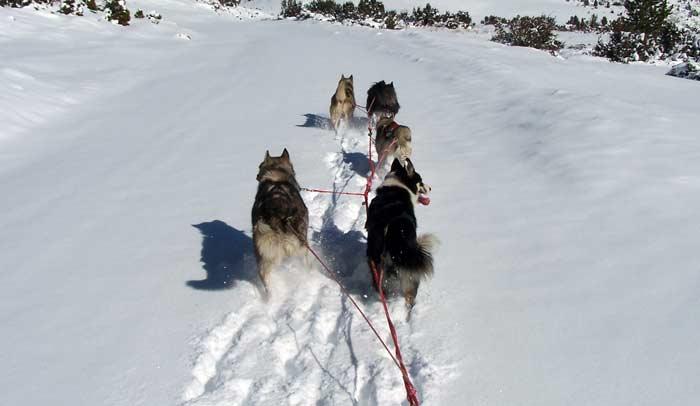 Trineos con perros en Beille ® ADT-Ariege/Angaka