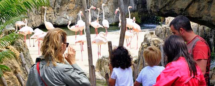 El Bioparc Valencia es un espacio ideal para pasar un día en familia