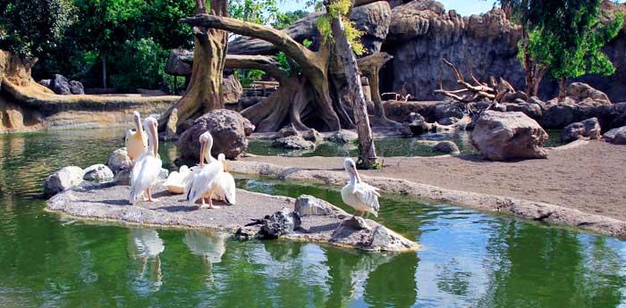 Aves de Madagascar