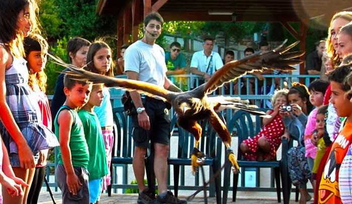 Taller de aves rapaces en el Camping Serra de Prades