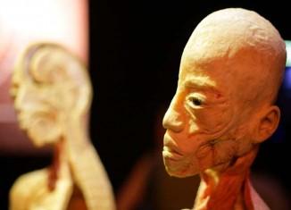 imagen La exposición Human Bodies triunfa…