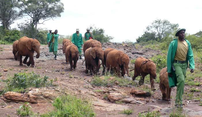 Orfanato de elefantes Daphne Sheldrick