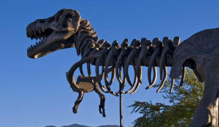 Museo del Desierto, México