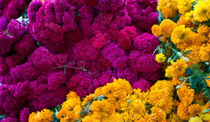 Flores-Oaxaca