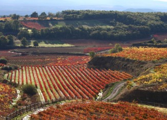 imagen La Rioja Alavesa promociona el…