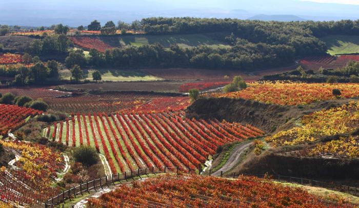 Camino Ignaciano a su paso por la Rioja Alavesa
