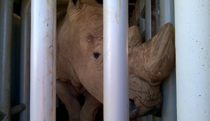 Rinoceronte en el Parque de la Naturaleza de Cabárceno
