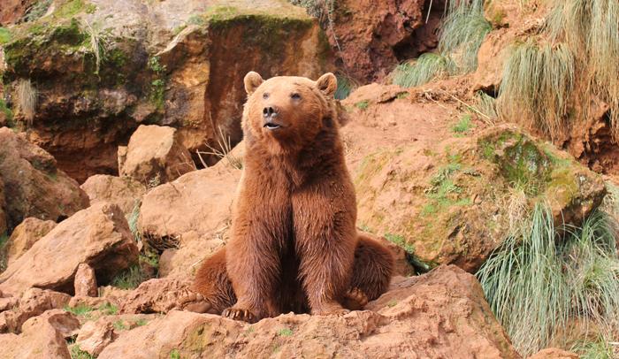 Un oso saludando a los visitantes del Parque de la Naturaleza de Cabárceno