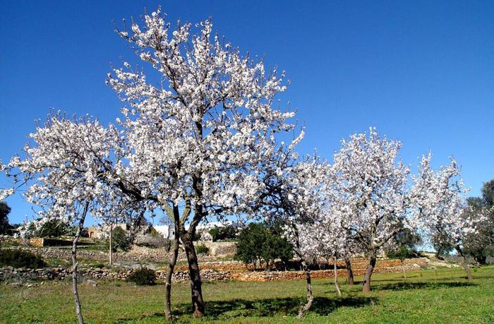 Paisaje primaveral en Ibiza