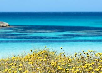 Playa de Ses Illetes. Foto Ismael Ibáñez