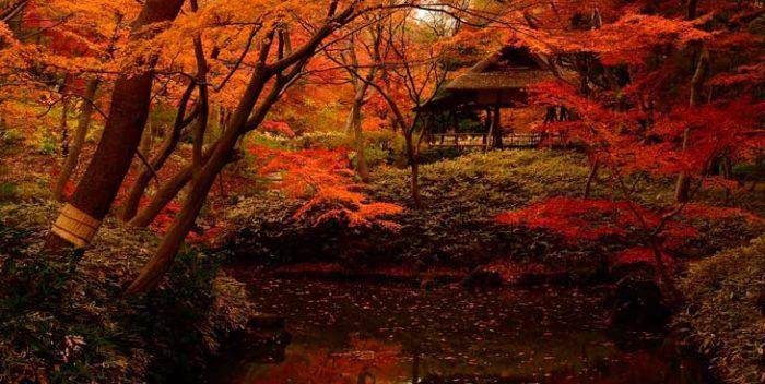 Paisajes de Tokio en otoño