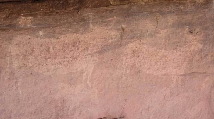 Toros del Navazo en el Parque Cultural Sierra de Albarracín