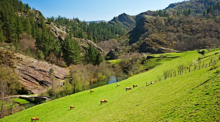 Ferreira. Foto Camilo Alonso. Foto cedida por Turismo de Asturias.