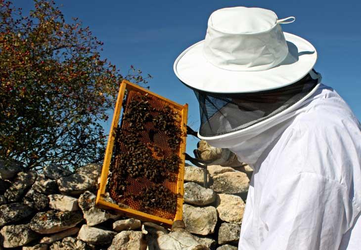 En la ruta del vino de Cigales se puede vivir una experiencia de apicultor