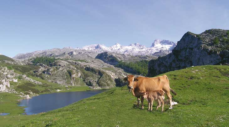 Lagos de Covadonga. Foto Daniel Martín. Cedida por Turismo de Asturias.