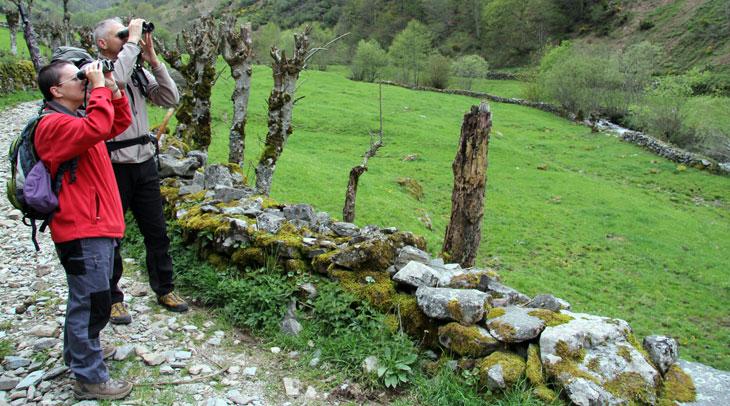 Muniellos. Foto Alfonso Polvorinos. Cedida por Turismo de Asturias.