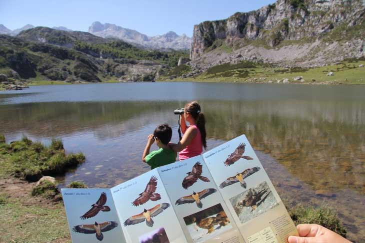 Observación de quebrantahuesos. Foto Alfonso Polvorinos. Cedida por Turismo de Asturias.