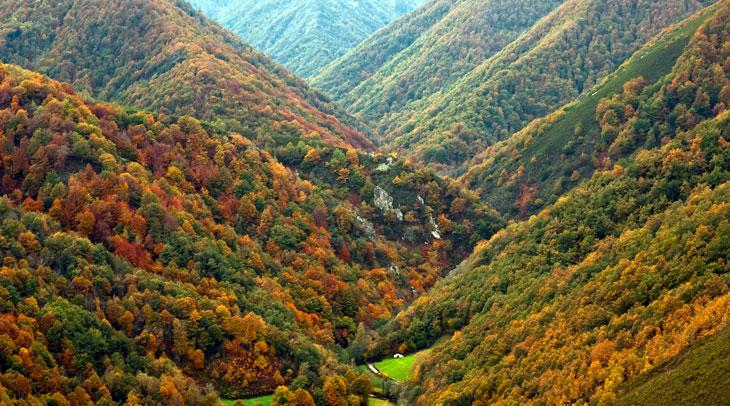 Reserva Natural Integral de Muniellos. Foto Carlos Salvo. Cedida por Turismo de Asturias.