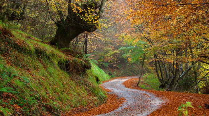Bosque de Quirós. Foto Juanjo Arrojo. Cedida por Turismo de Asturias.