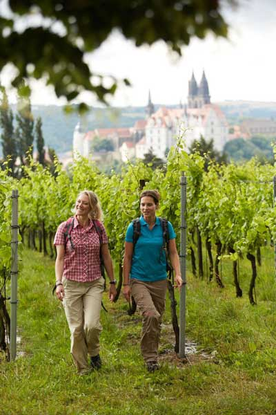 Paseo por los viñedos de las afueras de Meissen
