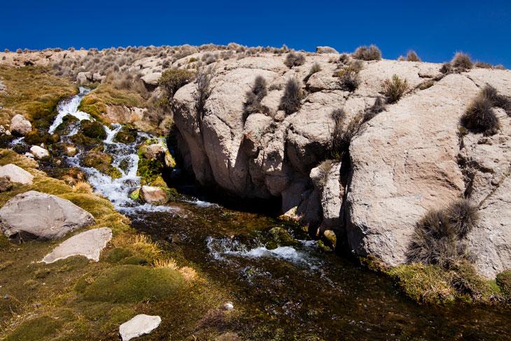 Manantial de agua que riega el pueblo de Parinacota © Ronny Belmar