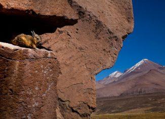 imagen Ruta Arica-Parinacota (Chile): la épica…