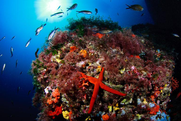Fondo submarino de Formentera. Autor Jordi Benítez