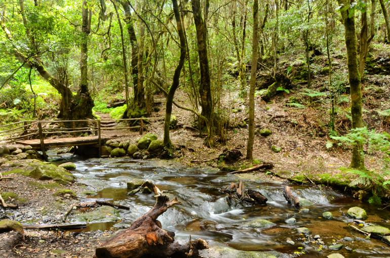 Bosque de El Cedro, en el Parque Nacional de Garajonay