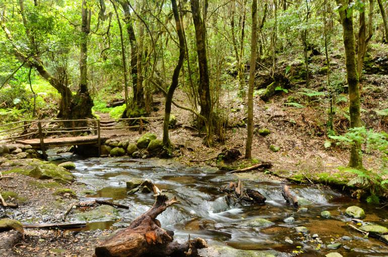 El Cedro en el Parque Nacional de Garajonay