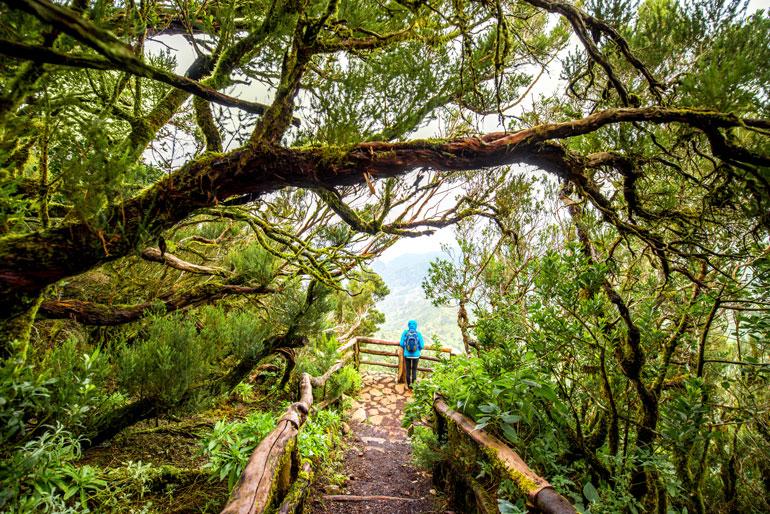 Senderismo por el Parque Nacional de Garajonay, en La Gomera