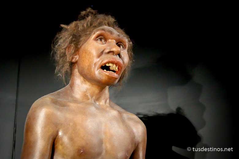 Galería de los Homínidos del Museo de la Evolución Humana