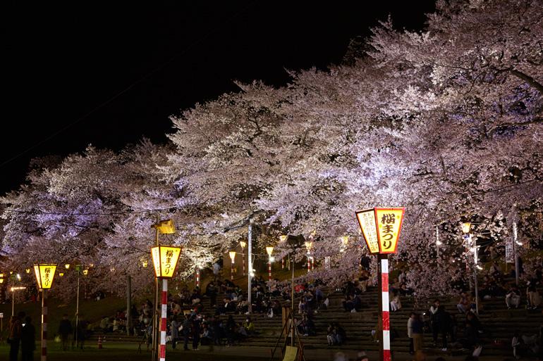 Vista nocturna de cerezos en flor en ©JNTO