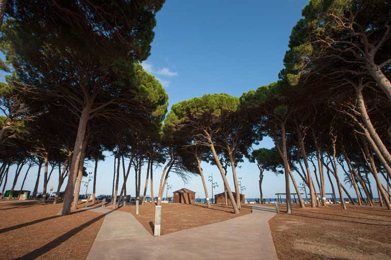 Parc del Pinar de Perruquet