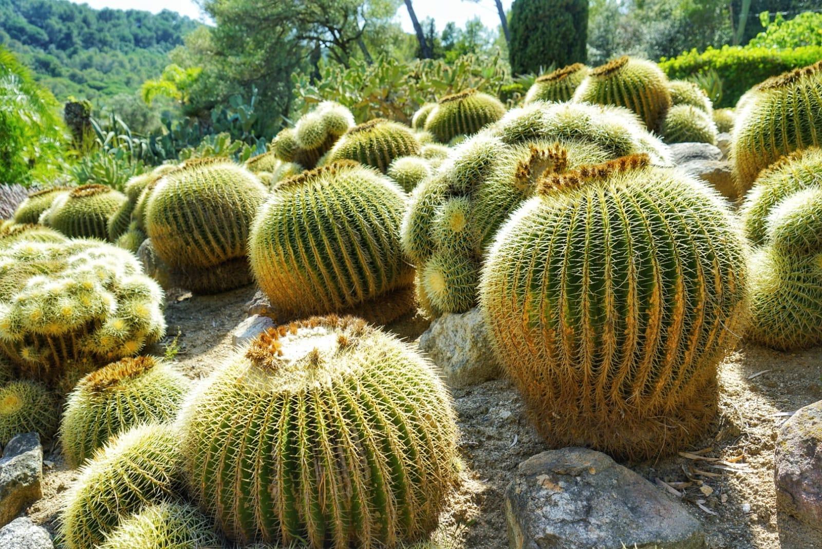 Jardín Pinya de Rosa
