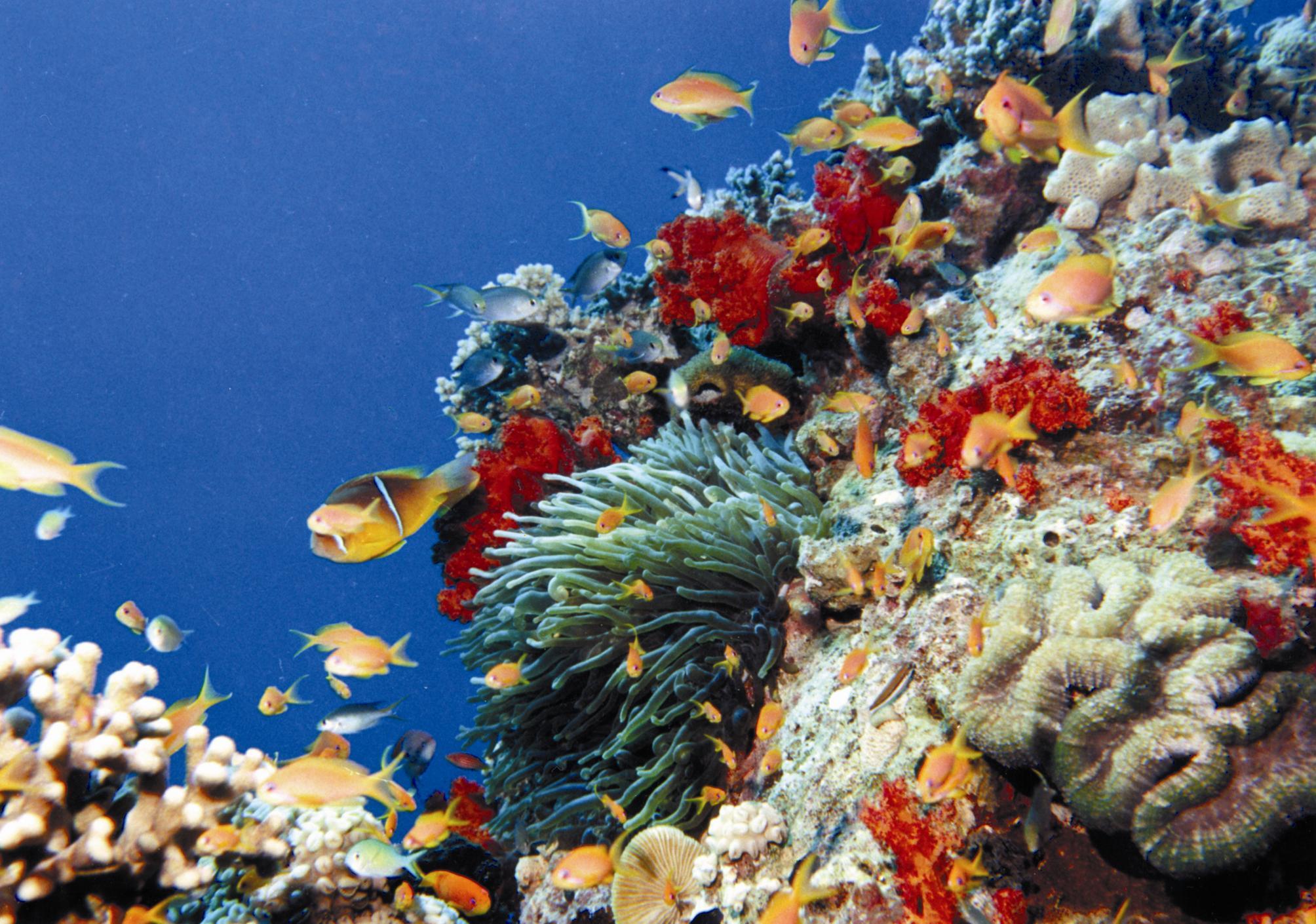 Peces del fondo submarino de Aqaba