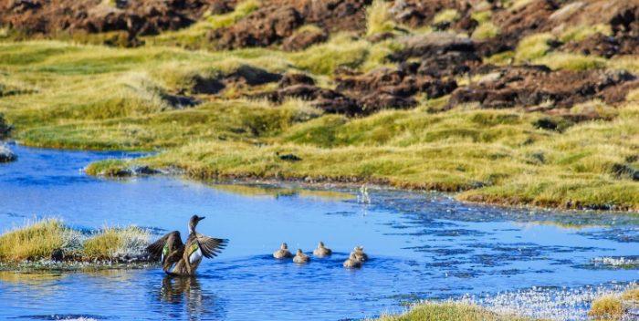 imagen Chile y sus parques nacionales