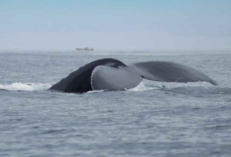 Avistamiento de cetáceos © Visit Centroamerica